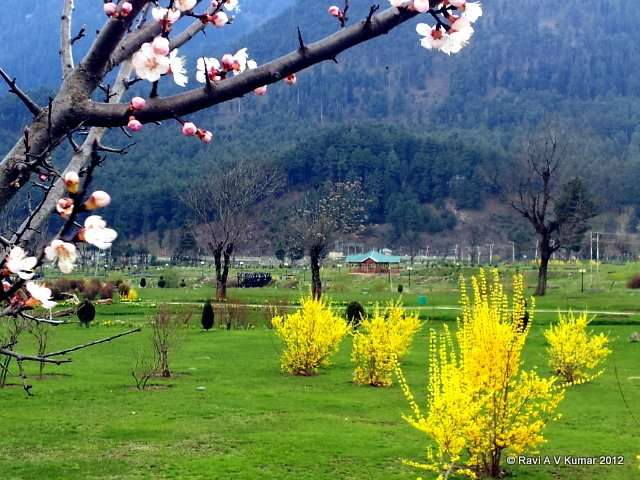 another day in paradise pahalgam