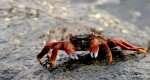 Crab feeding my soul