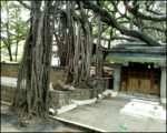 Step Back to Move Forward Vidya Sury (3)