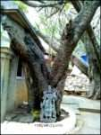 Step Back to Move Forward Vidya Sury