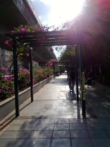 Vidya Sury A Walk To Remember