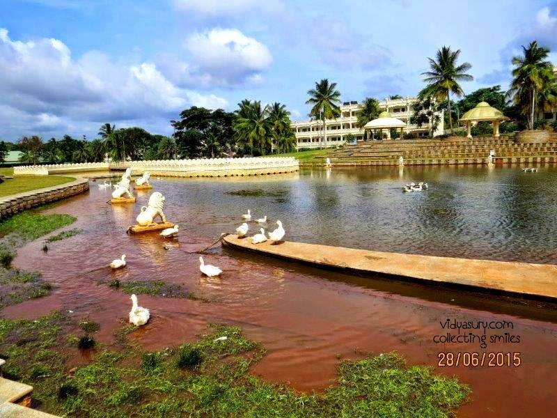 art of living duck pond