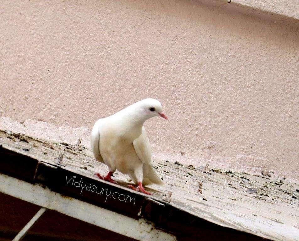 Vidya Sury Bird Watching