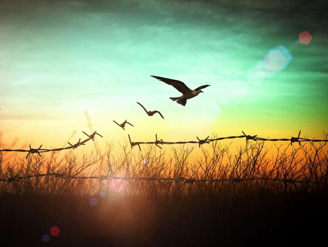 why forgiveness heals