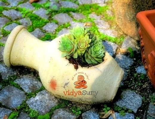Xeriscaping, Mindful gardening Vidya Sury