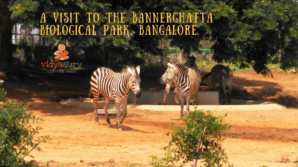 A visit to the Bannerghatta Biological Park Vidya Sury