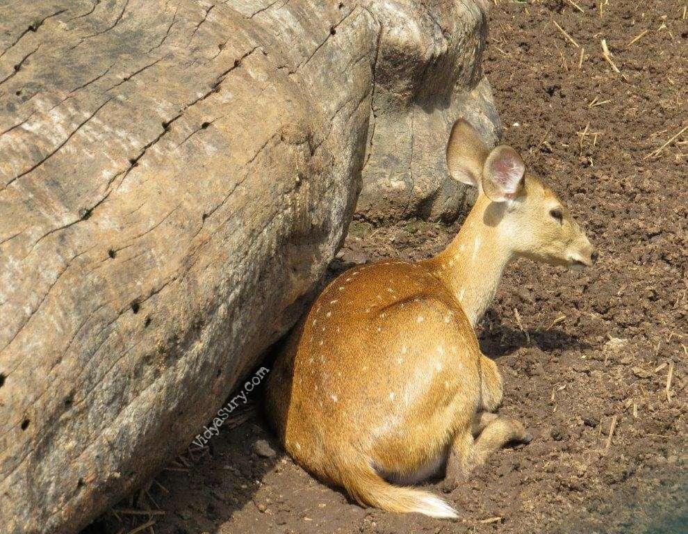 Bannerghatta Biological Park Vidya Sury