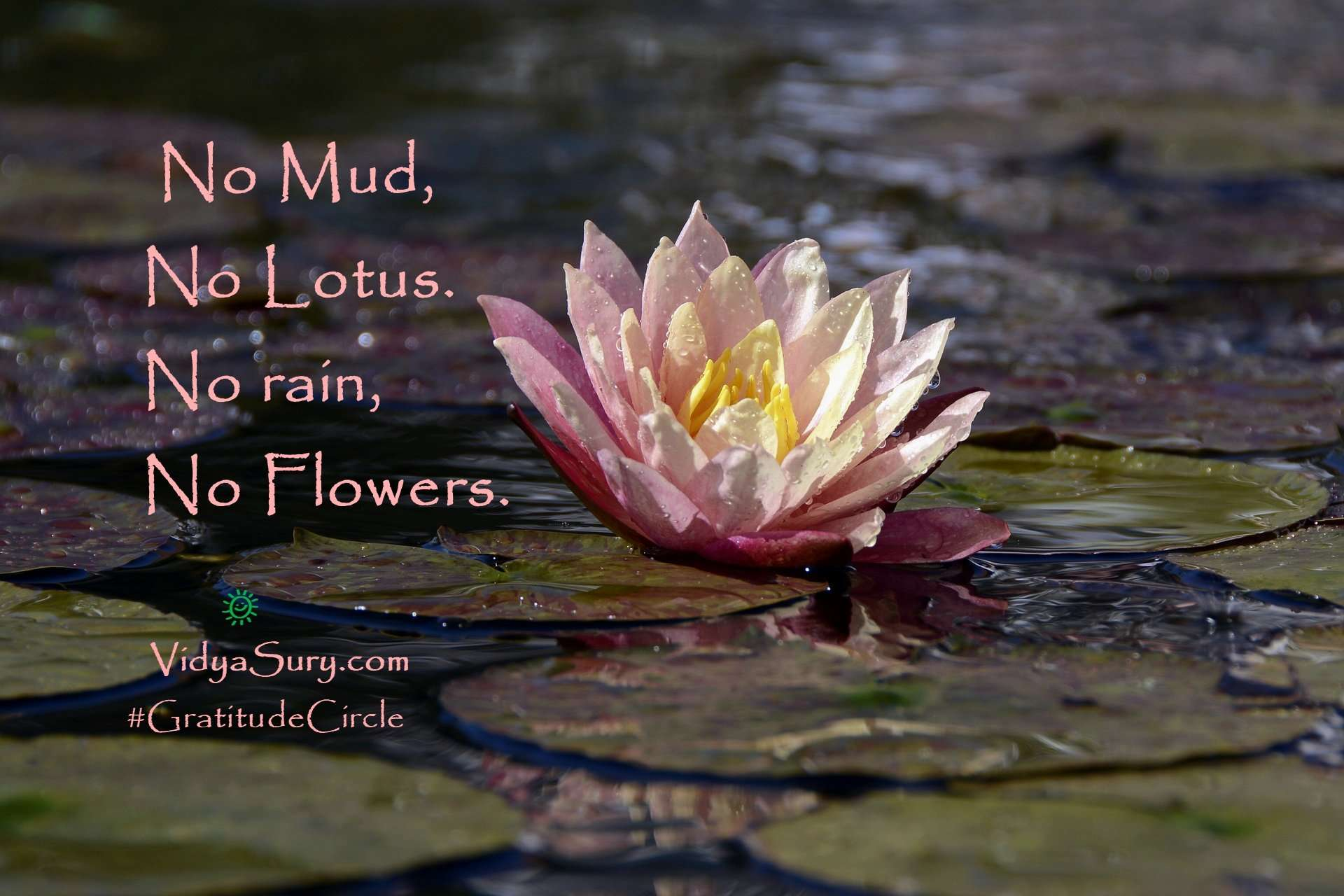 No mud, No lotus. No rain, No flowers. #GratitudeCircle #mindfulness
