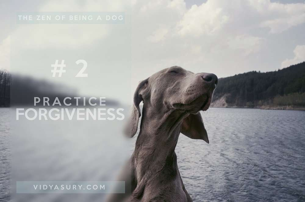 Lesson 2 The Zen of being more dog--It's about the dog. The dog book blog tour #Zen #dogs
