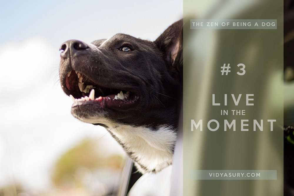 Lesson 3 The Zen of being more dog--It's about the dog. The dog book blog tour #Zen #dogs