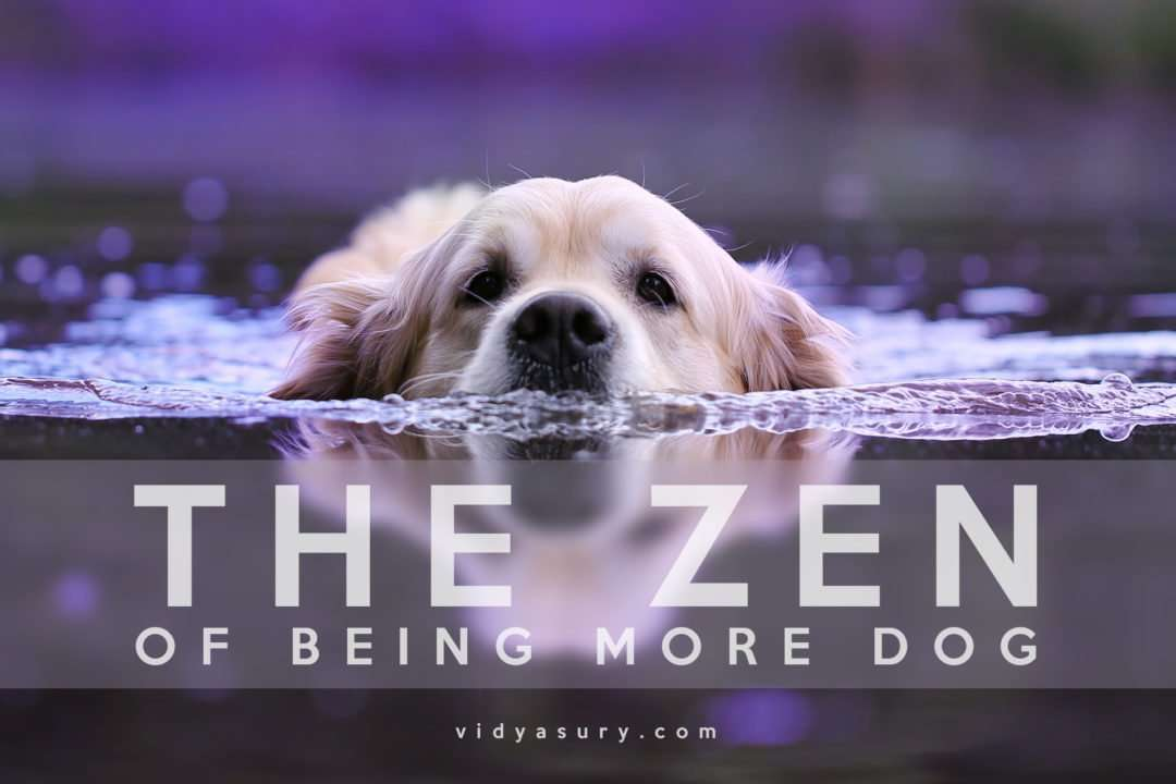 The Zen of being a dog--It's about the dog. The dog book blog tour #Zen #dogs