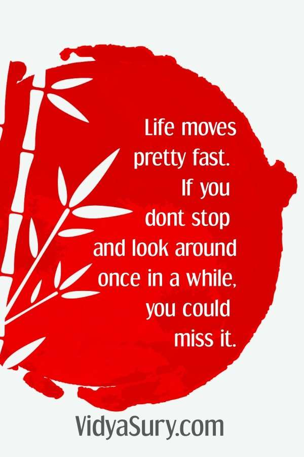 Life moves pretty fast. If you dont stop and look around once in a while, you could miss it. So stop stand stare #inspiringquotes #travel #mindfulness