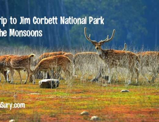 A trip to Jim Corbett National Park in the monsoons
