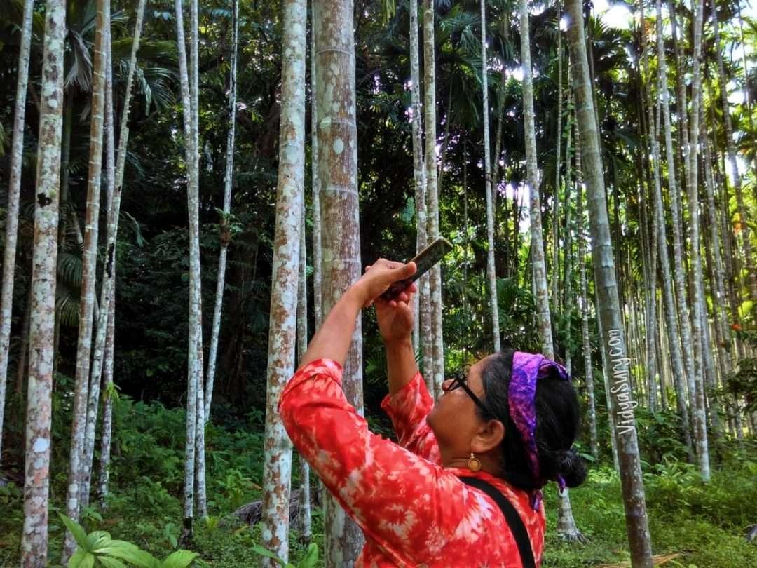 Walking Tall in the Betelnut plantation