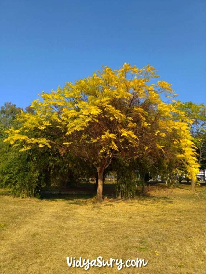 Life Happens Coffe Helps Thursday Tree Love