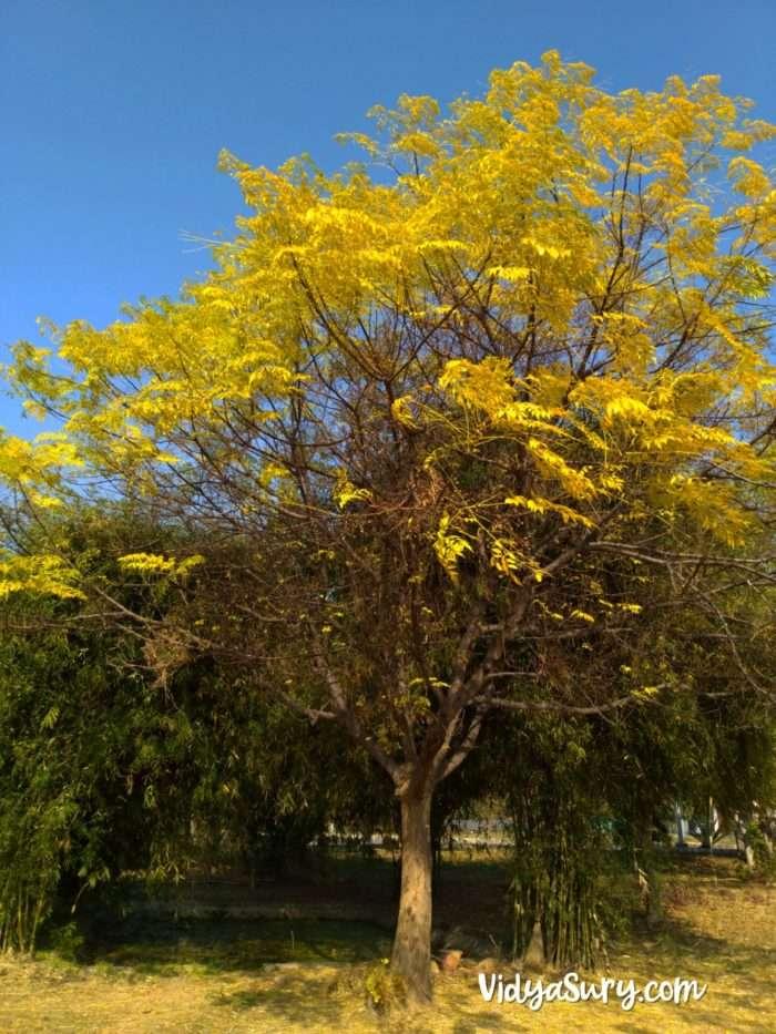 Tree on campus Life Happens