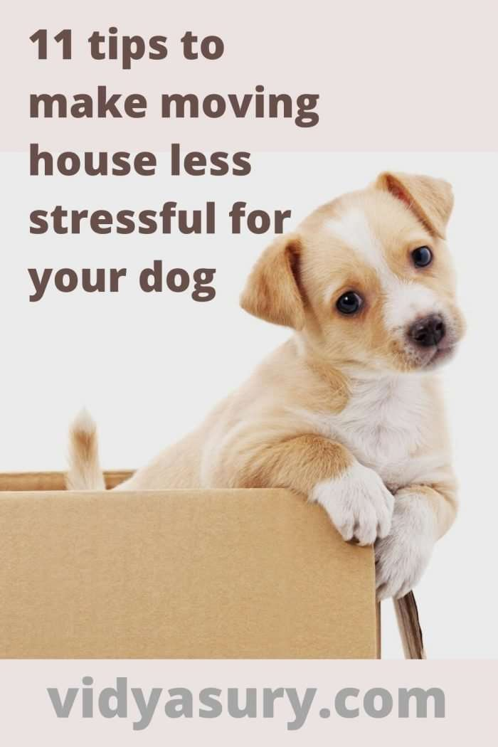 11 tips to make moving house less stressful for your dog