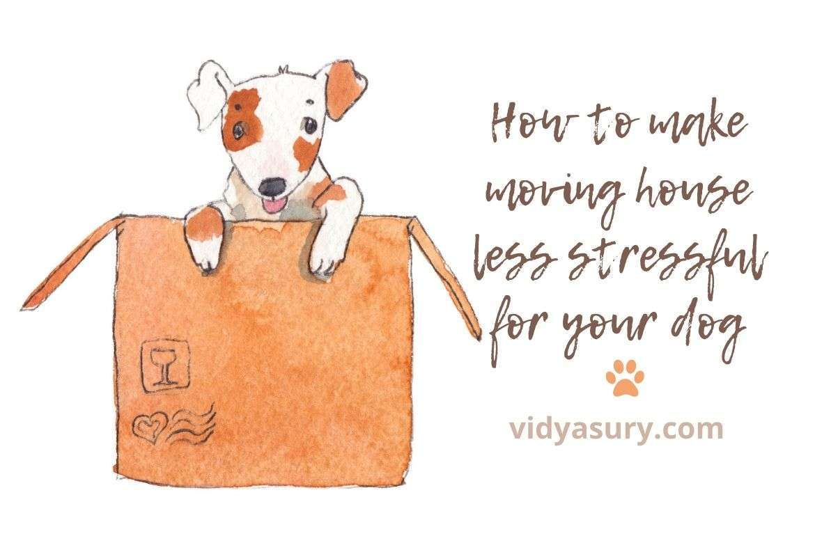 How to make moving house less stressful for your dog