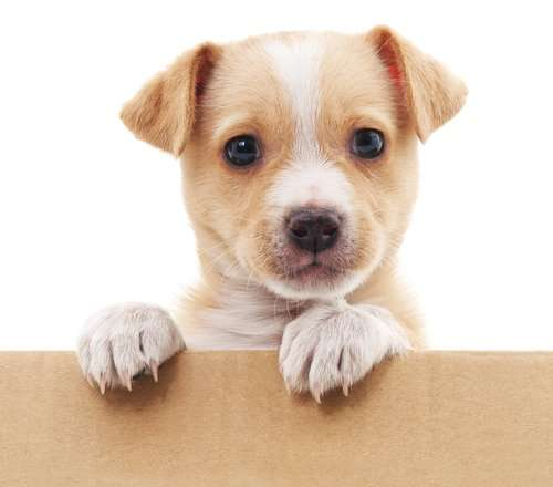 Make moving house less stressful for your dog