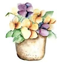 Pansies flowers at home for your wellbeing