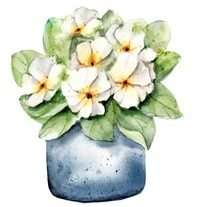 Primrose flowers at home for your wellbeing